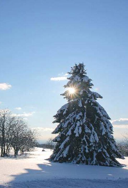 Wintertage im Vogelsberg